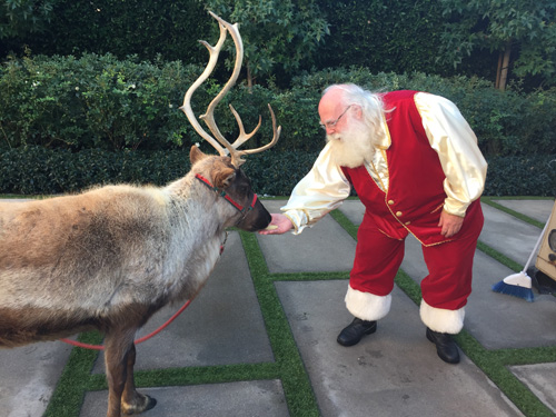 Santa Claus feeding reindeer in Beverly Hills